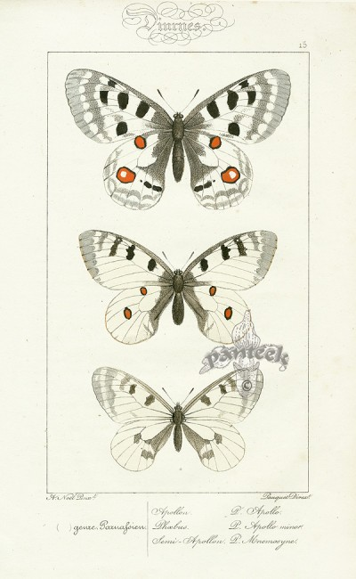 Vintage butterfly print, Vintage lithograph, original lithographs India, Home Decor with botanical prints